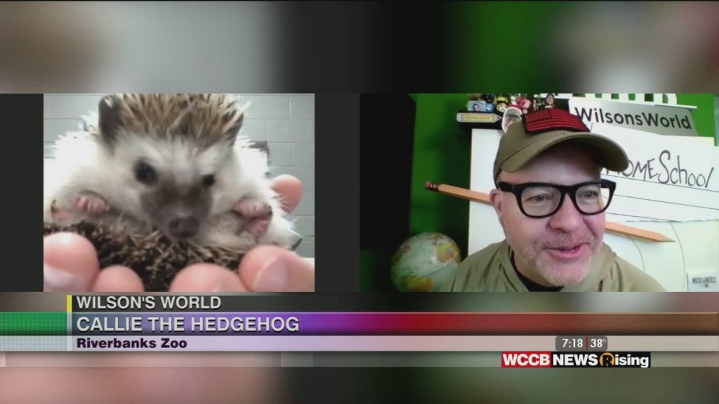 Wilson's World Homeschool: Meeting Callie The Hedgehog At The Riverbanks Zoo