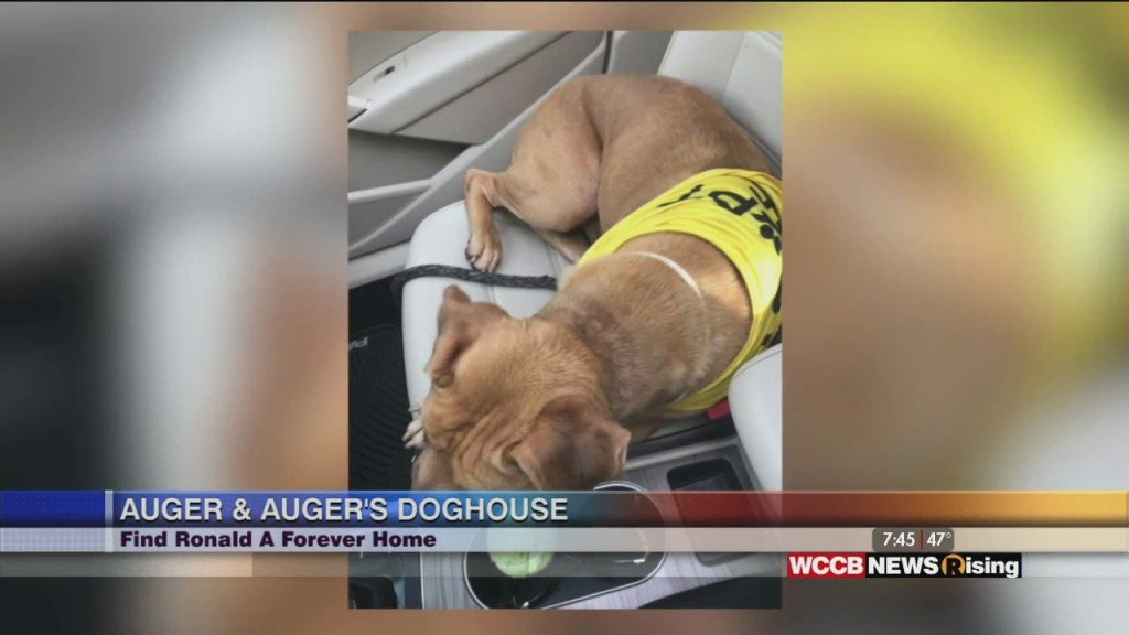 Auger & Auger's Doghouse: Meet Ronald!