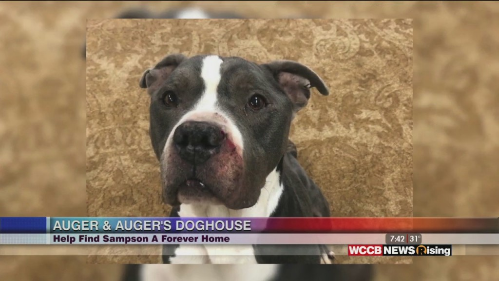 Auger & Auger's Doghouse: Meet Sampson
