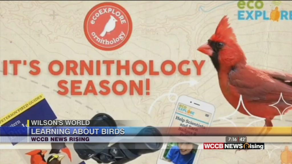 Wilson's World Homeschool: Winter Birds With The Eco Explorers At The Nc Arboretum