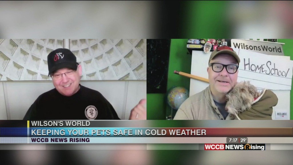 Wilson's World: Making Sure We Keep Out Pets Warm And Comfortable During The Cold Winter Weather