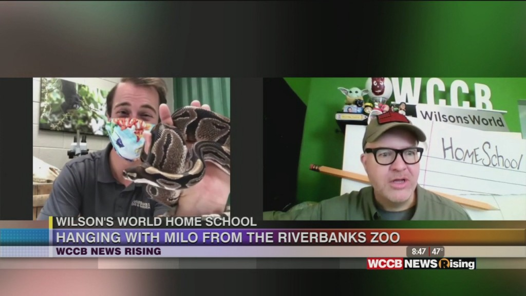Wilson's World Homeschool: Getting And Up Close Look At The Ball Python At The Riverbanks Zoo