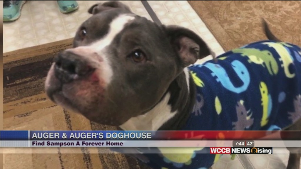 Auger & Auger's Doghouse: Meet Sampson!