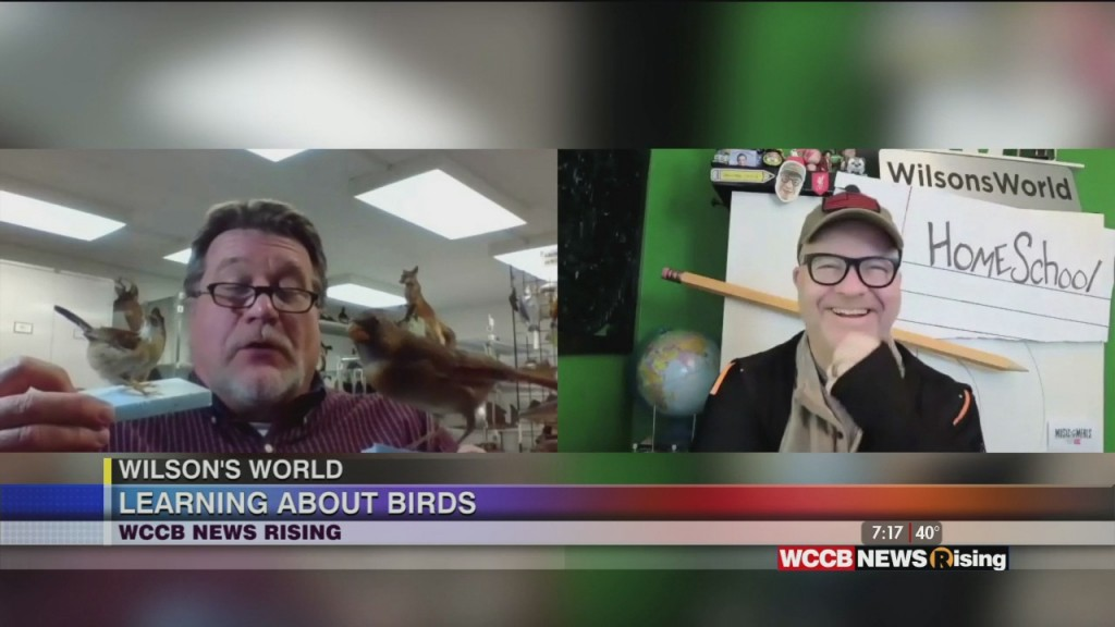 Wilson's World Homeschool: It's All About The Birds With Dr. Steve At The Museum Of York County
