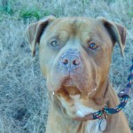 Pets Availale For Adoption In January Aster