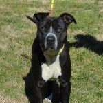 Pets Availale For Adoption In January Bert