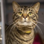Pets Availale For Adoption In January Bruce