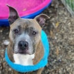 Pets Availale For Adoption In January Cassidy