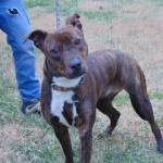 Pets Availale For Adoption In January Cello
