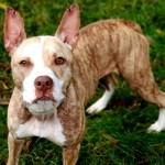 Pets Availale For Adoption In January Charlotte