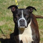 Pets Availale For Adoption In January Chester