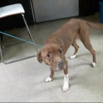 Pets Availale For Adoption In January Cora