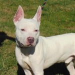 Pets Availale For Adoption In January Dallas