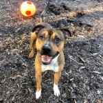 Pets Availale For Adoption In January Don