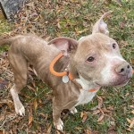 Pets Availale For Adoption In January Dro
