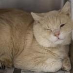 Pets Availale For Adoption In January Ebenezer