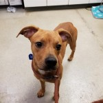 Pets Availale For Adoption In January Eliza