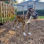 Pets Availale For Adoption In January Ember