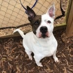 Pets Availale For Adoption In January Harmony