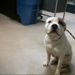 Pets Availale For Adoption In January Hawkeye