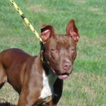 Pets Availale For Adoption In January Helena