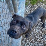 Pets Availale For Adoption In January Indigo