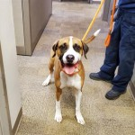 Pets Availale For Adoption In January Jack