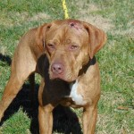Pets Availale For Adoption In January Jay
