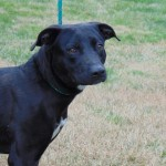 Pets Availale For Adoption In January King