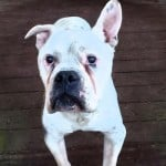 Pets Availale For Adoption In January Kix