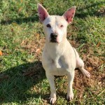 Pets Availale For Adoption In January Lucy