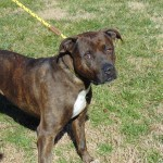Pets Availale For Adoption In January Minnie