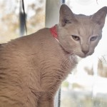 Pets Availale For Adoption In January Miss Kitty