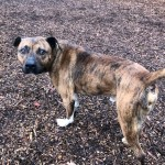 Pets Availale For Adoption In January Neil