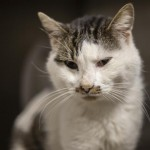 Pets Availale For Adoption In January Nelson