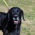 Pets Availale For Adoption In January Nida