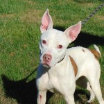 Pets Availale For Adoption In January Noel