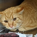 Pets Availale For Adoption In January Pumpkin