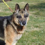 Pets Availale For Adoption In January Rambo