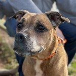 Pets Availale For Adoption In January Rocsi