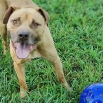Pets Availale For Adoption In January Ronald