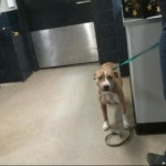 Pets Availale For Adoption In January Rose