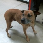 Pets Availale For Adoption In January Sergio