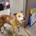 Pets Availale For Adoption In January Snoop