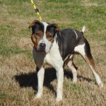 Pets Availale For Adoption In January Stetson