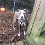 Pets Availale For Adoption In January Torrie