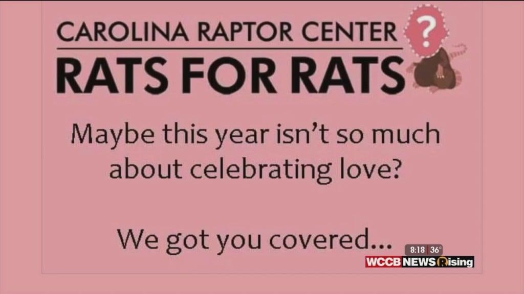 Wilson's World Homeschool: Getting Over A Broken Heart With The Help Of Carolina Raptor Center