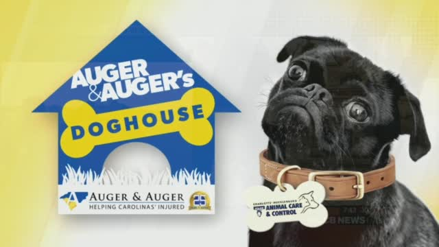 Auger & Auger's Doghouse: Meet Charlotte!