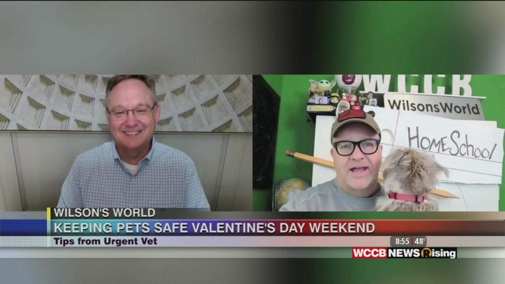 Wilson's World: Valentine Dangers For Your Four Legged Sweetheart