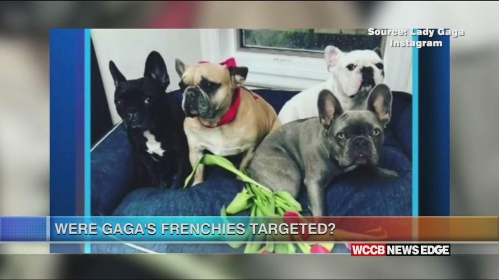Edge: Lady Gaga's Dogs